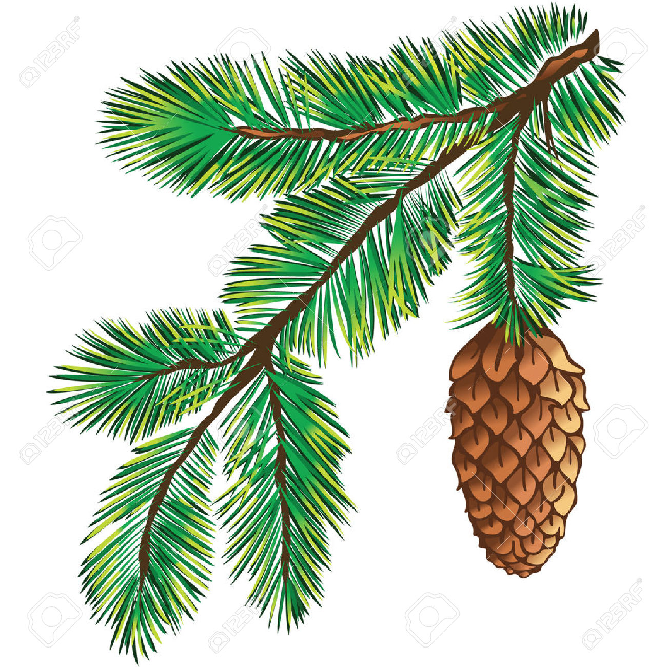 1300x1300 Fir Clipart Evergreen Tree