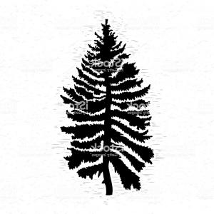 300x300 Png Pine Fir Tree Silhouette Drawing Pine Tree Orangiausa