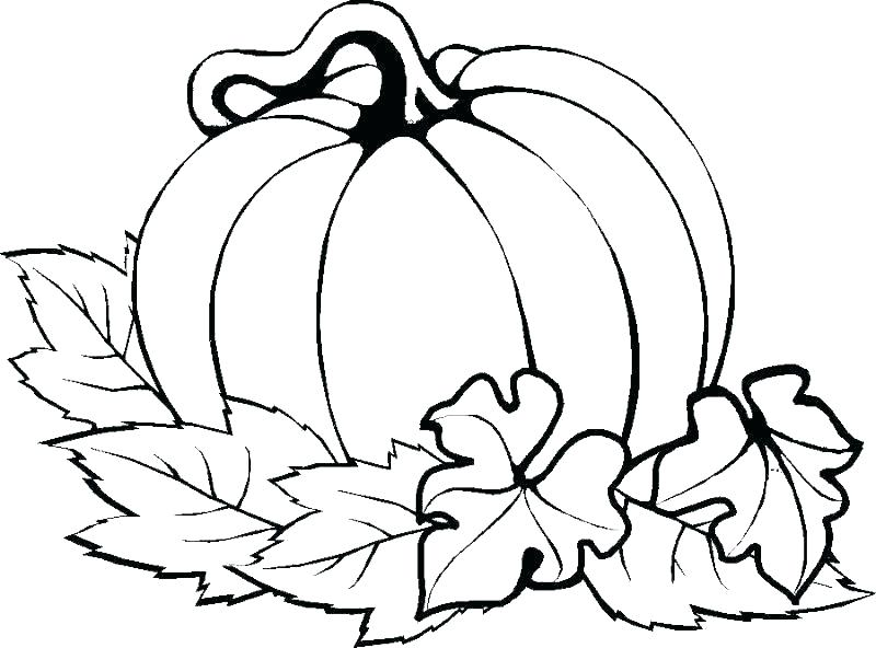 800x592 free pumpkin stencils for cat pumpkin stencil pumpkin outline