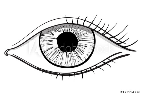 500x334 eye model pupil