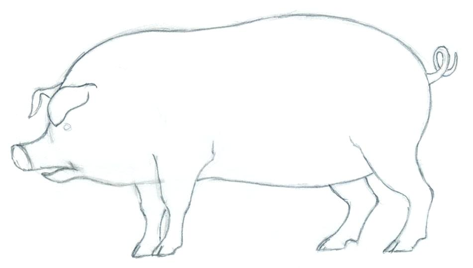 951x539 How To Draw A Pig Easy Draw Easy Pig Face Running