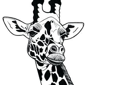 400x300 giraffe drawing images how to draw a giraffe step giraffe