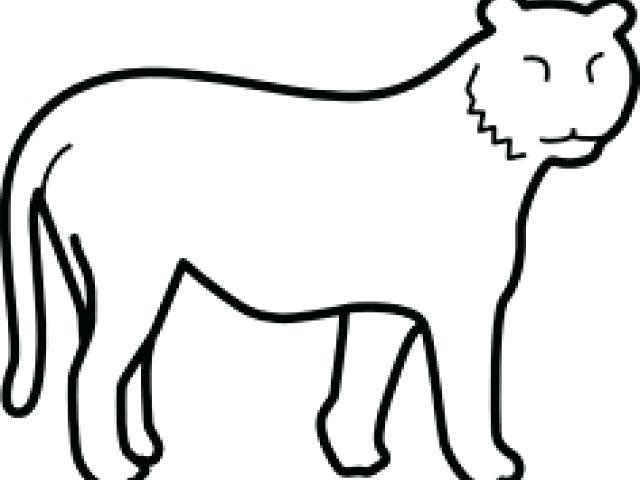 640x480 Tiger Outline Drawing Tiger Drawings Black And White Google Search