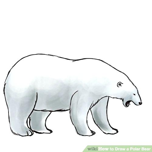 500x500 Bear Drawing Grizzly Bear Simple Drawing