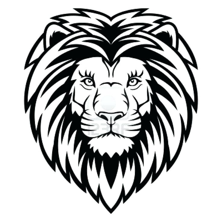 736x736 Easy Lion To Draw How To Draw A Google Search Projects Easy Lion