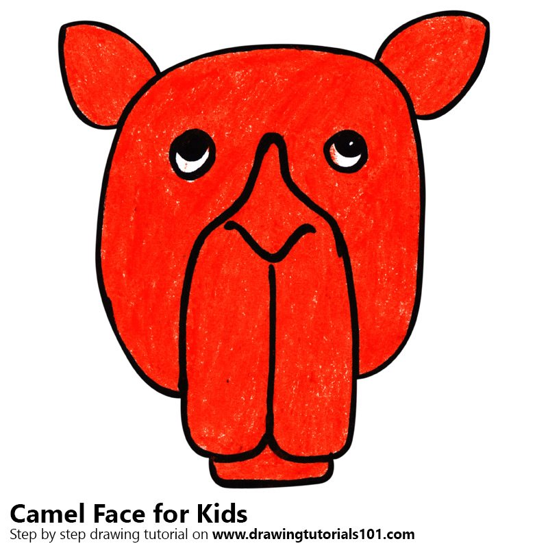 800x800 Learn How To Draw A Camel Face For Kids