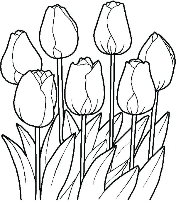 600x693 garden coloring pages fairy garden coloring pages flower garden