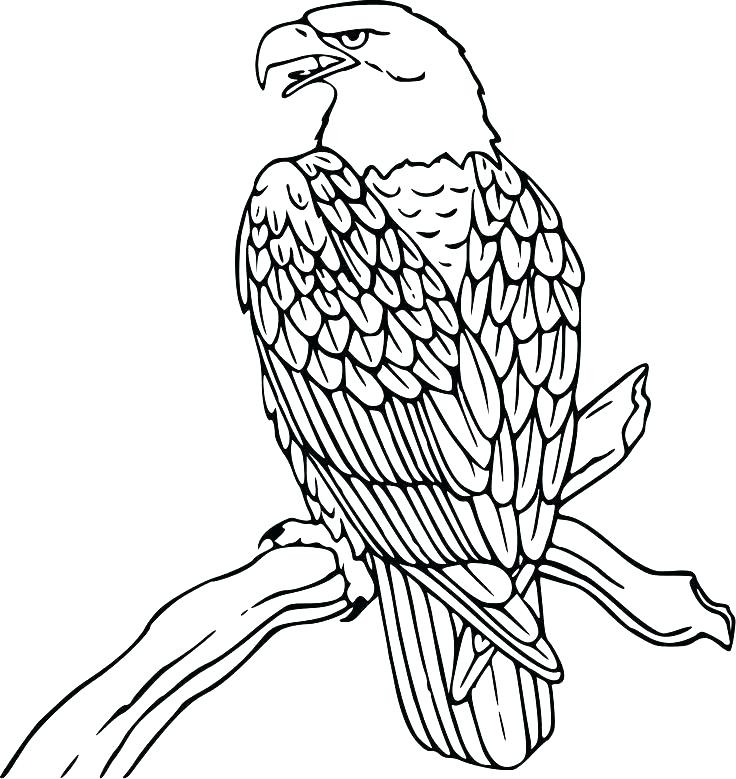736x779 coloring pages draw a falcon coloring drawing falcon coloring