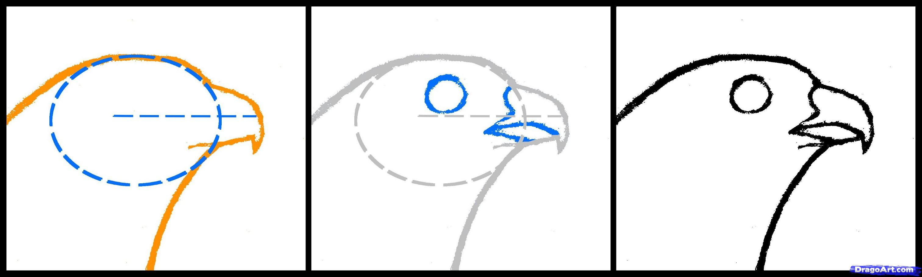 3024x908 how to draw a falcon head, peregrine falcon, step