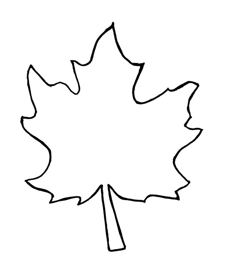 736x907 fall leaves drawing maple leaf drawing template fall leaf line