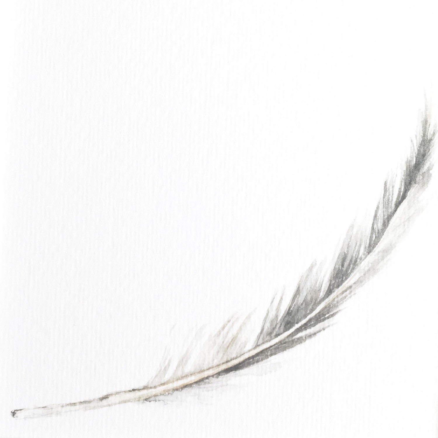 1500x1500 Feather Art Print Feather Print Feather Art Gray Feather Etsy