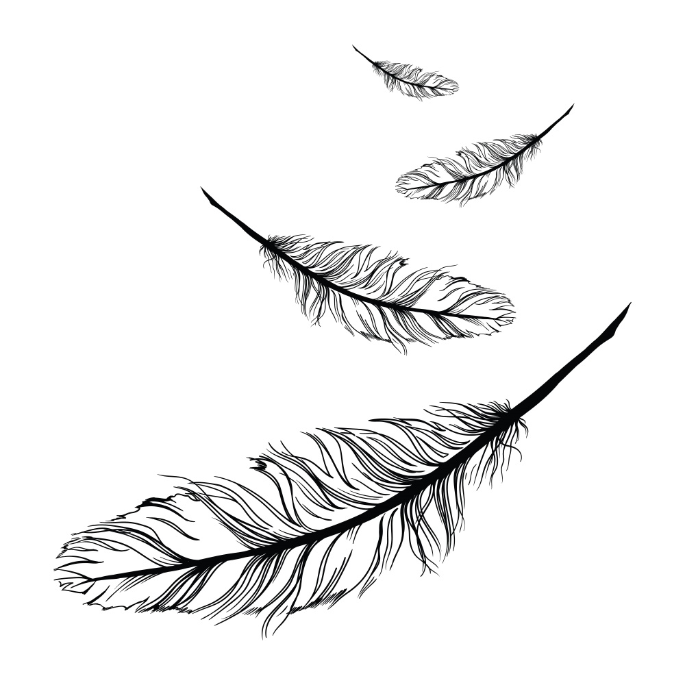 1000x1000 Huge Collection Of 'falling Feather Drawing' Download More Than