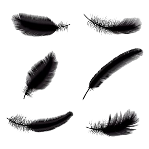 500x500 Collection Of Free Eyelash Drawing Feather Download On Ui Ex