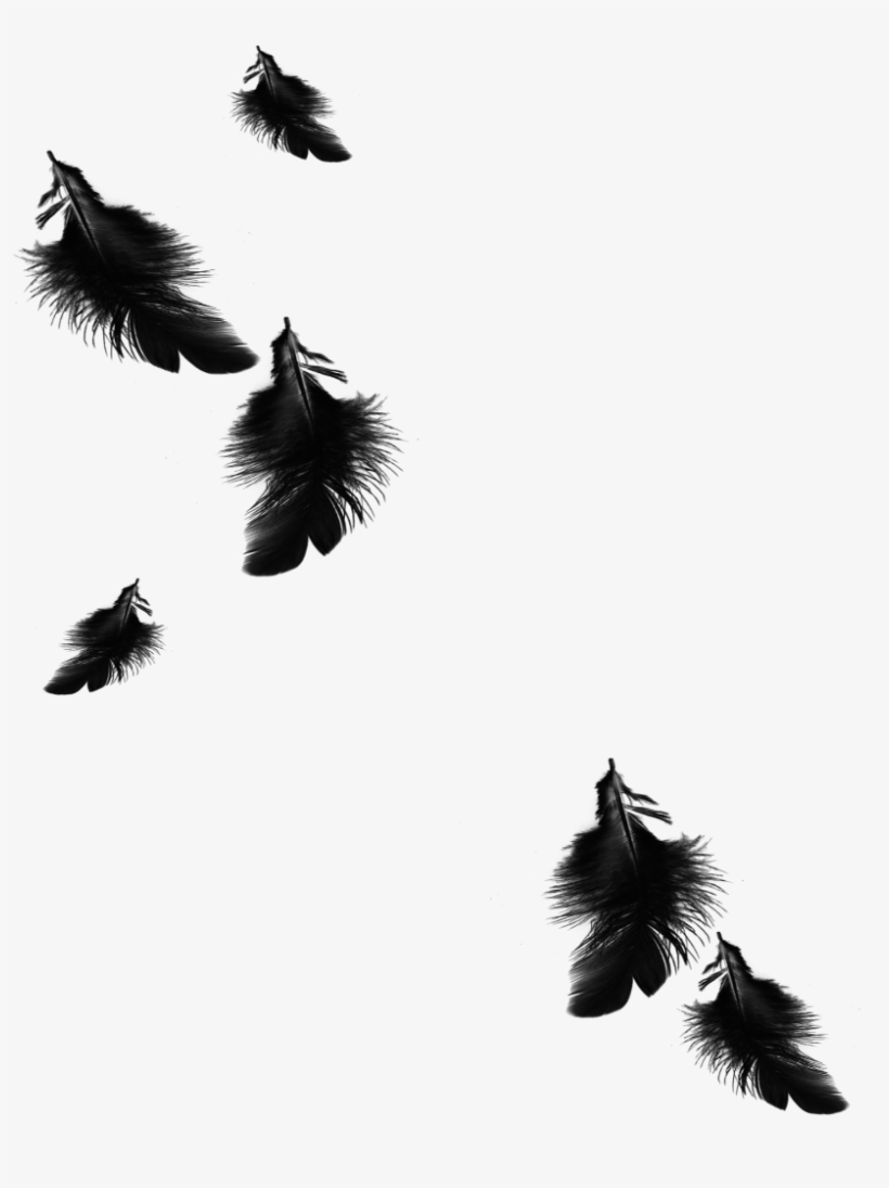 820x1095 Mq Black Feather Feathers Floating Falling