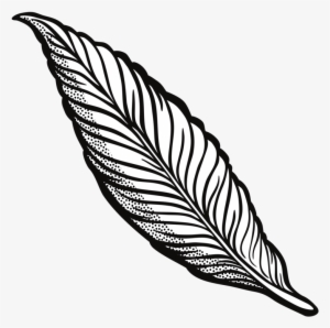 300x298 Falling Feathers Png Download Transparent Falling Feathers Png