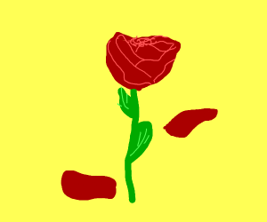 300x250 Every Rose Has Its Thorns