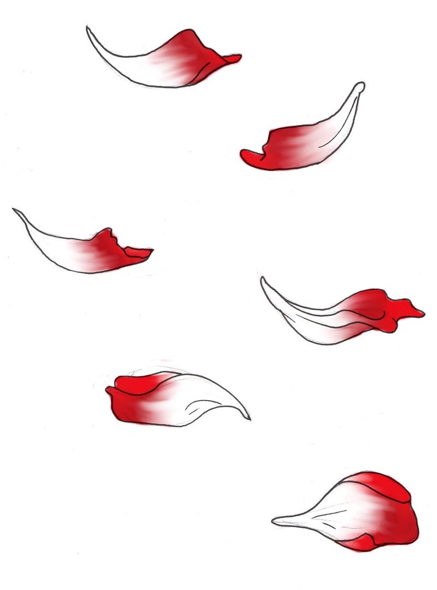 900x1215 Falling Drawing Paint Flower Petals