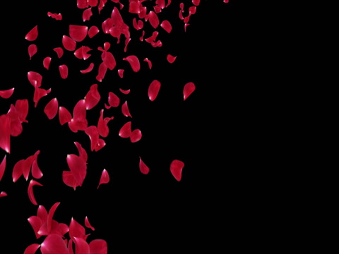 480x360 Flying Romantic Red Rose Flower Petals Falling Placeholder Alpha