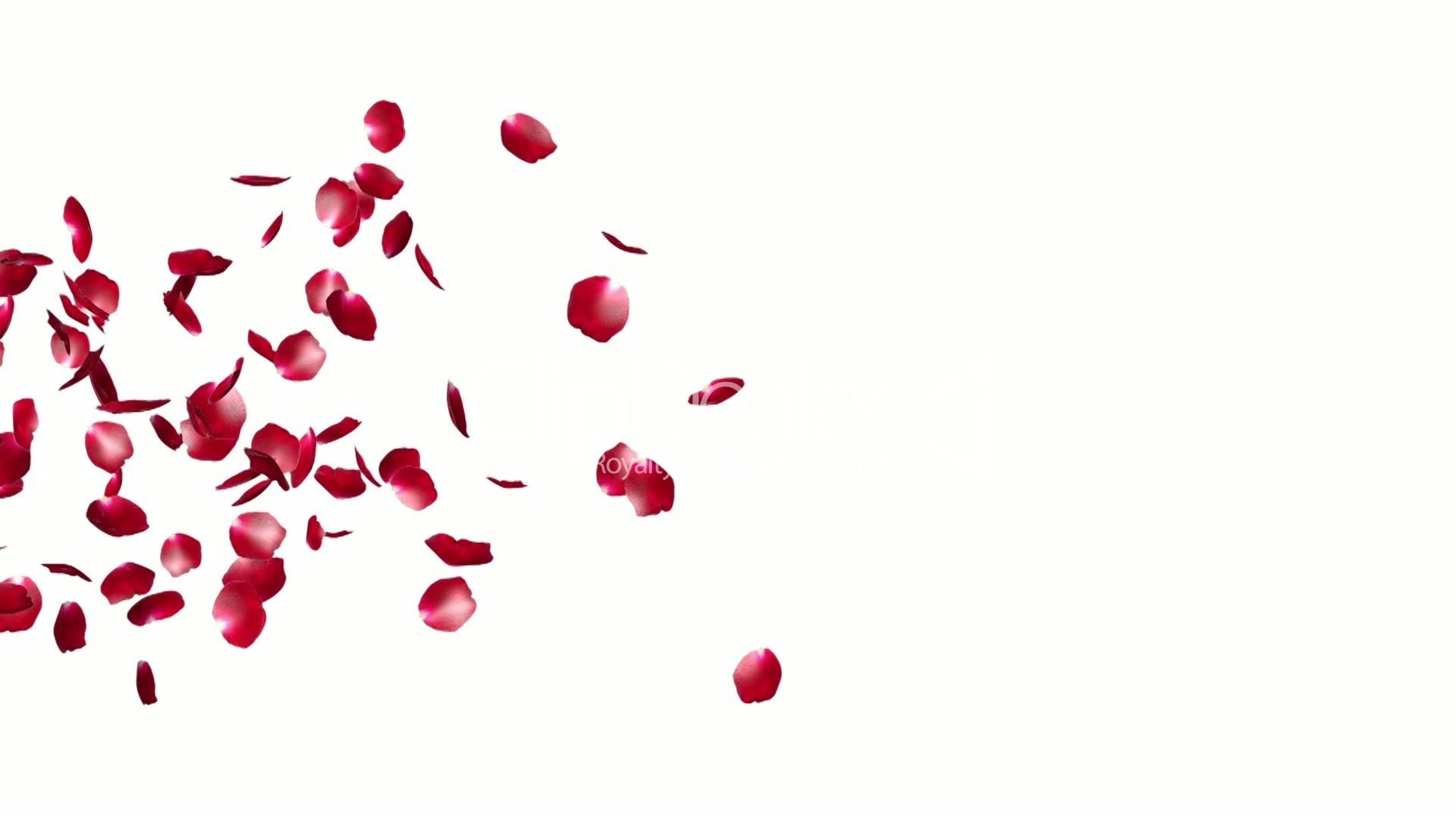1920x1080 Red Falling Rose Petals Drawings