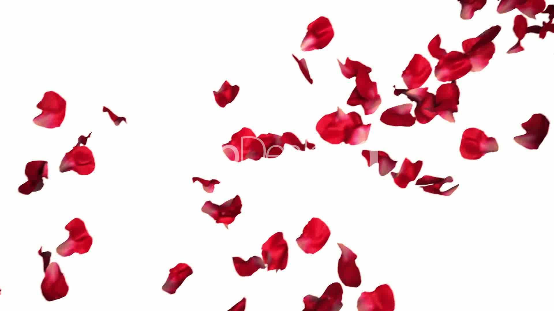 1920x1080 Rose Petals Wallpaper