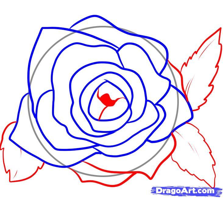 732x651 Step Draw Rose Petals