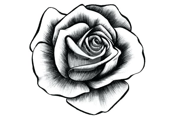 592x396 Drowing Rose Rose Drawing With Leaves Drawing Roses Easy
