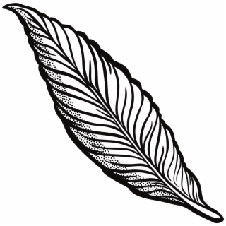 320x320 Hd Feather