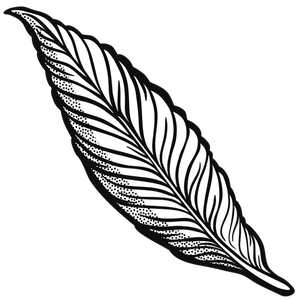 Feather Outline Drawing