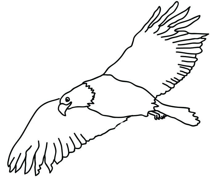 700x582 eagle template animal templates free premium templates bald eagle