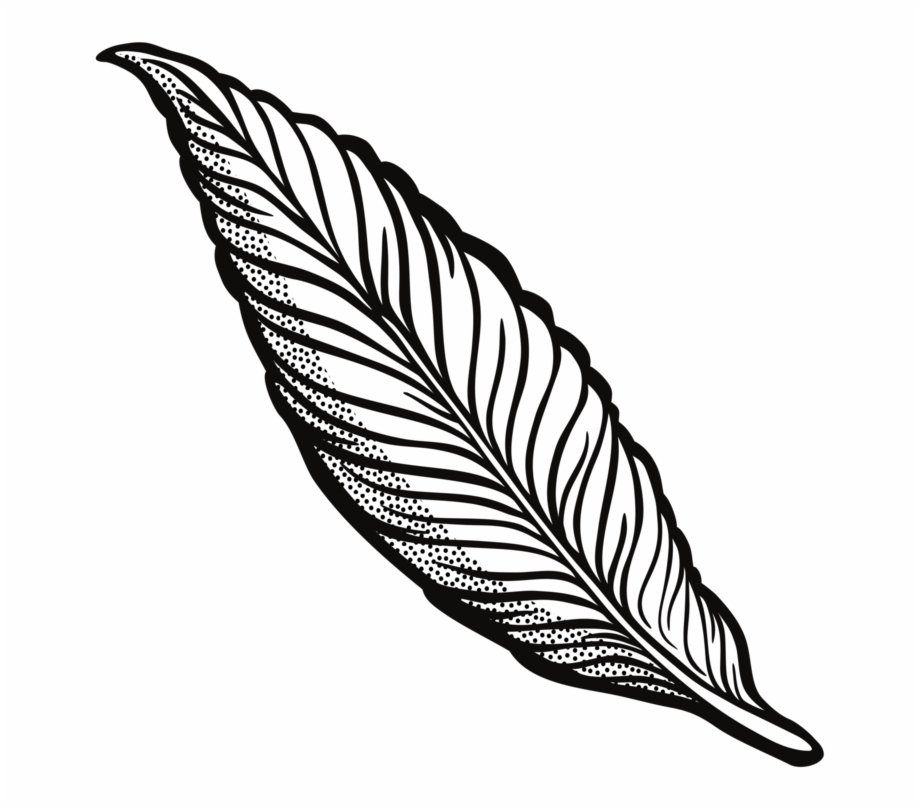 920x808 Drawing Feather Pen