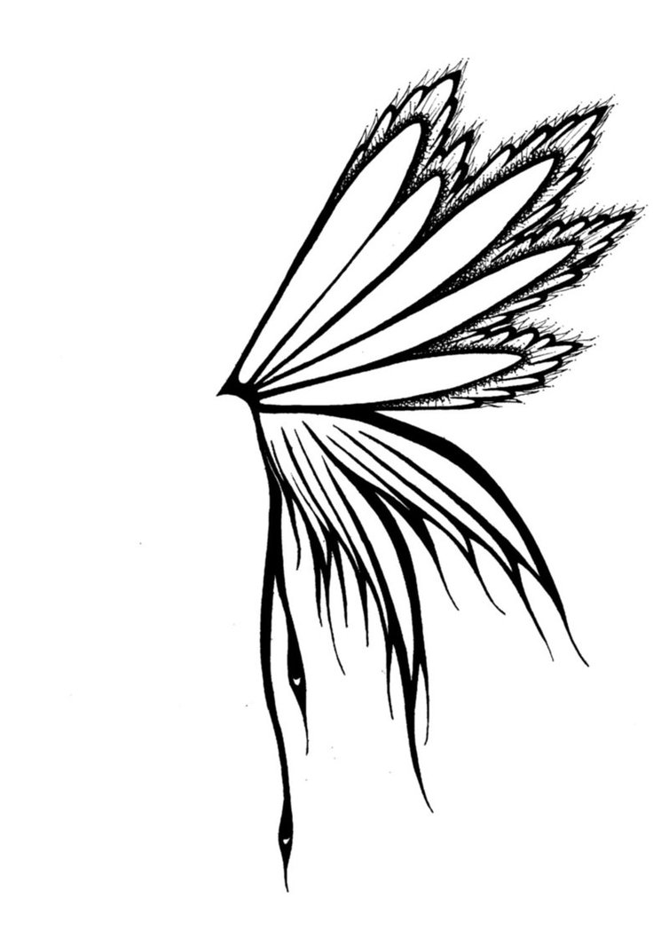 Feather Wings Drawing