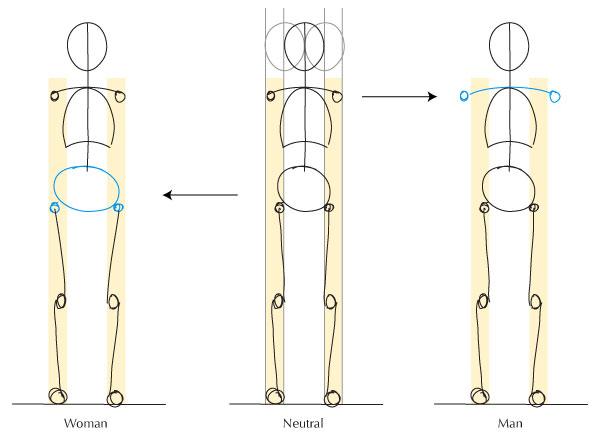 600x440 Human Anatomy Fundamentals Advanced Body Proportions