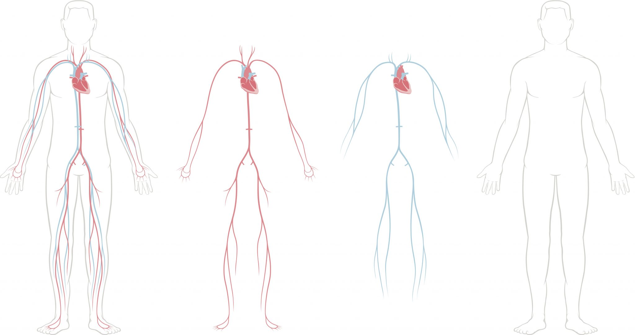 2048x1081 Anatomy Of The Heart And Cardiovascular System Texas Heart Institute