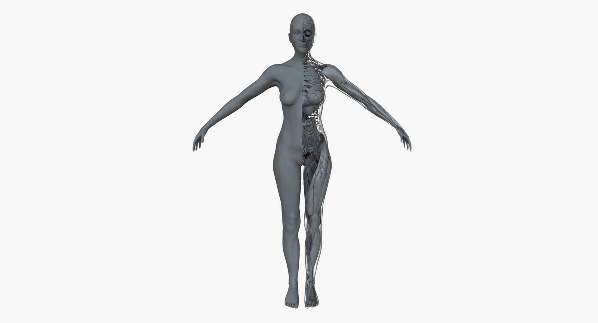 1920x1038 Ultimate Female Anatomy Project Model