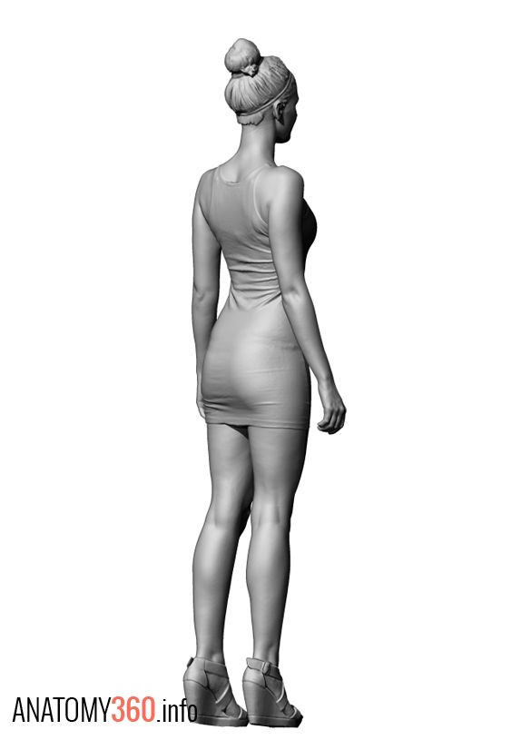 Female Body Reference Drawing | Free download best Female Body