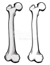 197x256 image result for cartoon femur the human body cartoon, human
