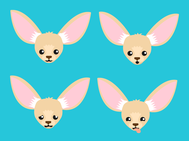 800x600 Many Faces Of Fergus The Fennec Fox