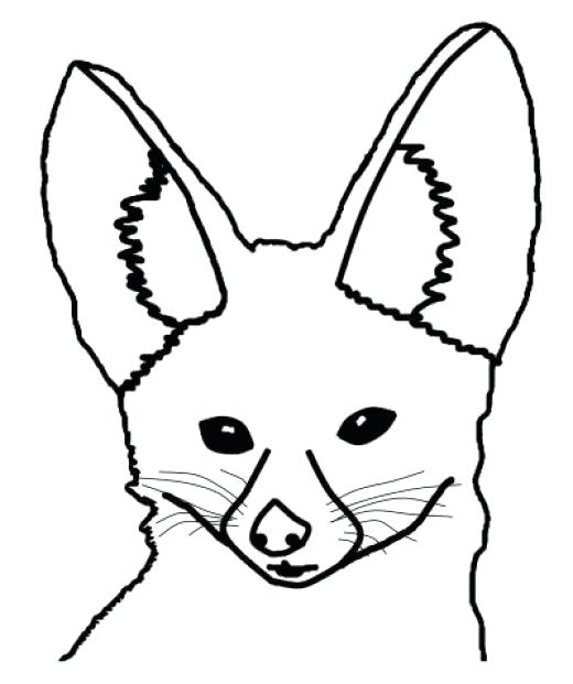 520x621 Realistic Fox Coloring Pages Awesome Baby Fennec