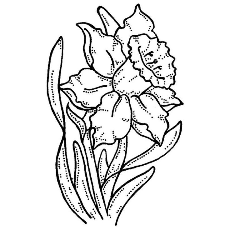 736x736 daffodil drawing field daffodil for free download