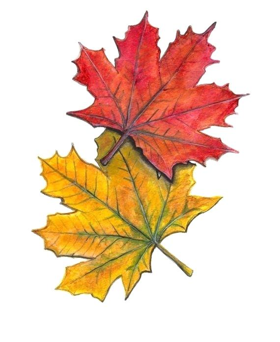 570x695 fall leaf drawing image titled simple fall leaf drawing