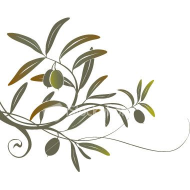 380x380 olive branch drawing ollie wallpaper olive tattoo, olive