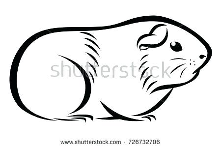 450x301 guinea pig drawings guinea pig coloring pages printable drawings