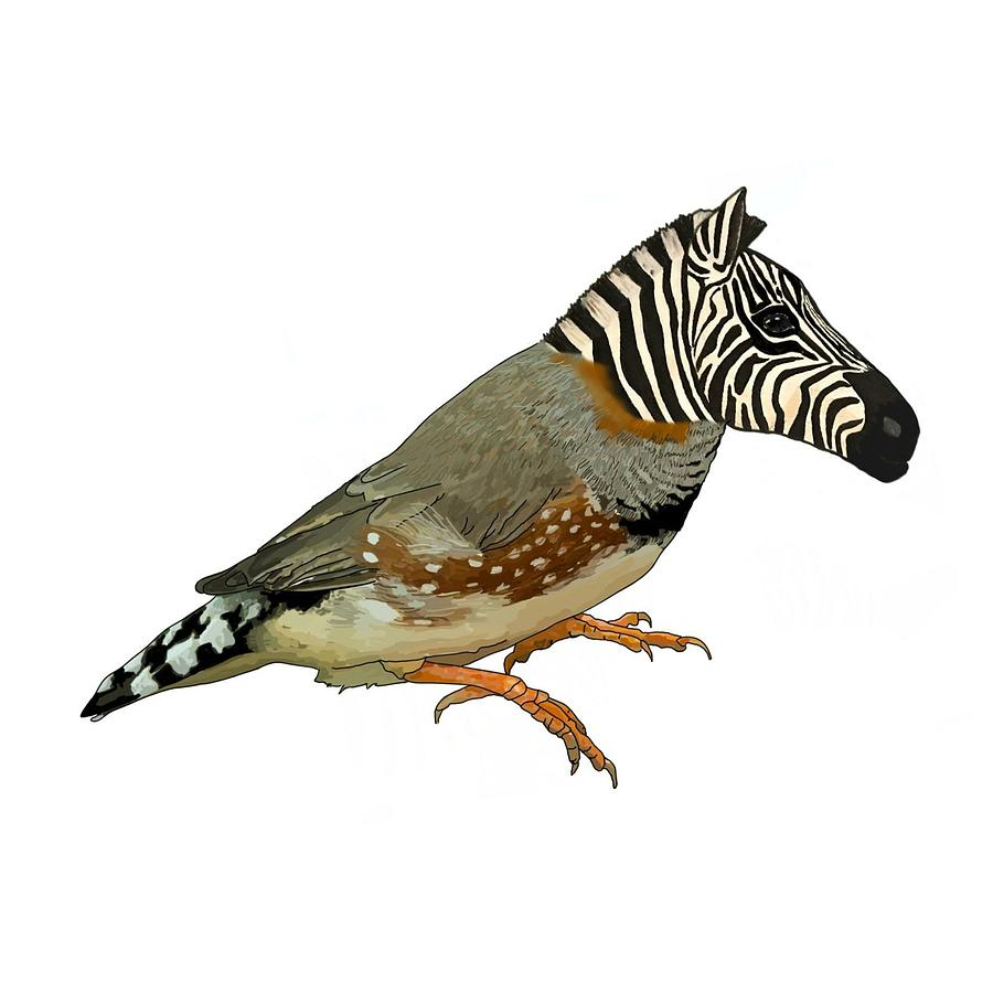 Collection of Finch clipart | Free download best Finch ...
