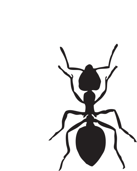 481x599 Collection Of Free Ant Drawing Strong Download On Ui Ex