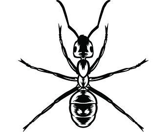 340x270 Fire Ants Etsy