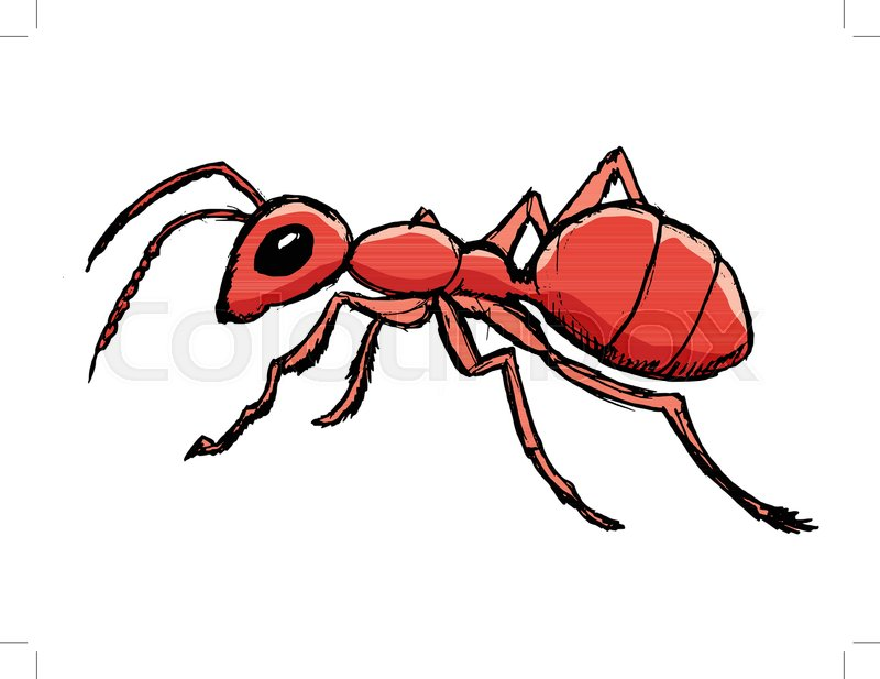 800x617 Red Ant