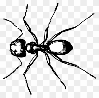 320x319 Banner Black And White Stock Ant Clipart Black