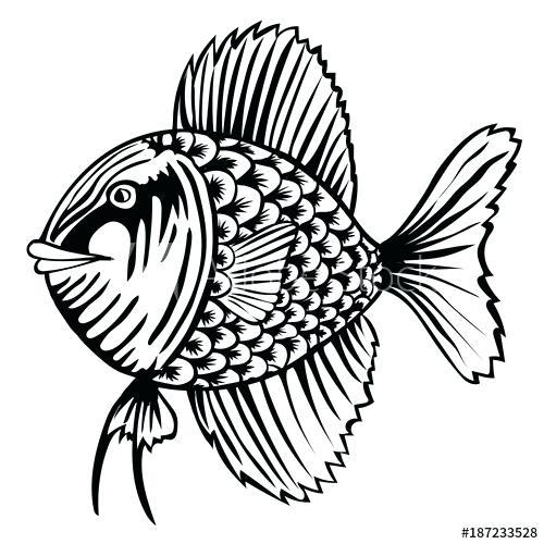 500x500 cartoon fish outline outline cartoon fish fish cartoon outline