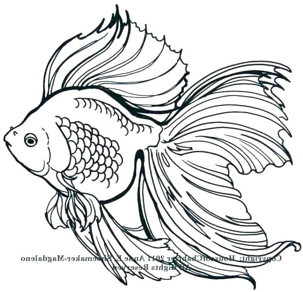 618x596 simple fish drawing fish drawing outline outline drawing of a fish