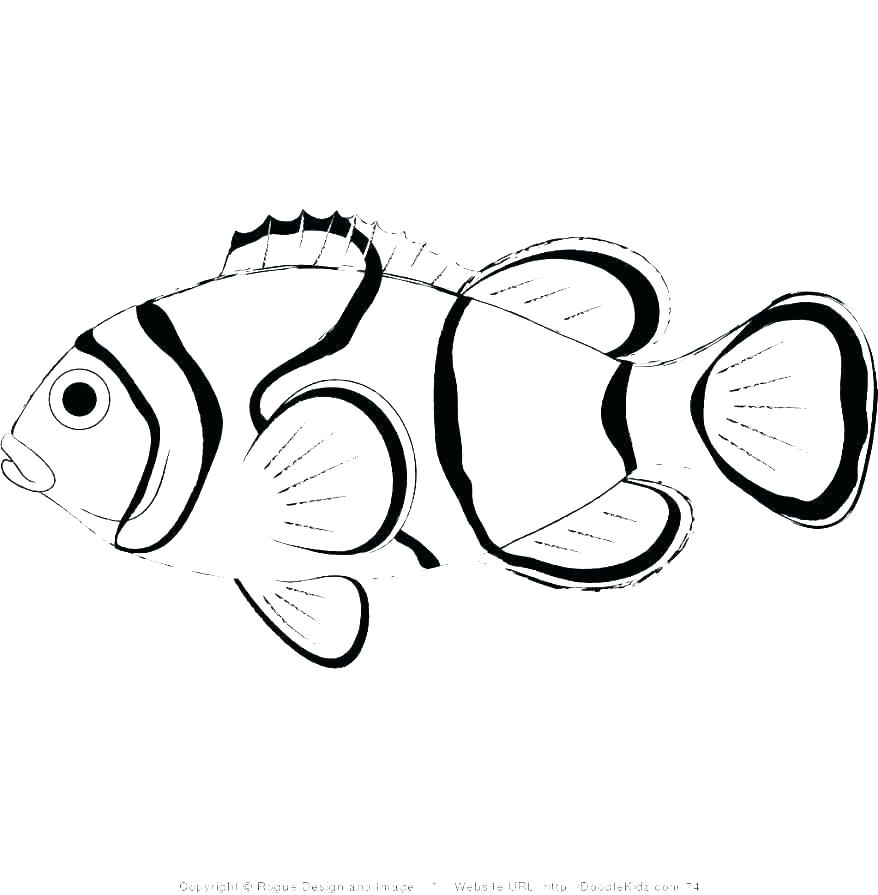 Fish Drawing Simple Free Download Best Fish Drawing Simple